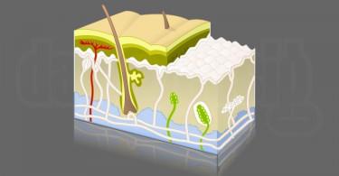 Jan Essig Illustration Haut Skin